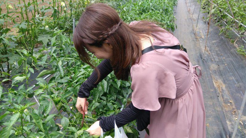 宿泊特典野菜収穫サービス券!!